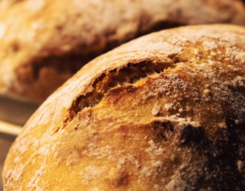 Everything To Know About Bread Makers